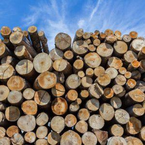 Drewno opałowe – czyli co powinieneś wiedzieć o drewnie do swojego kominka?